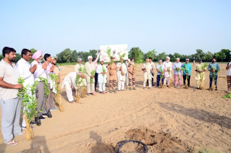 Grand Celebrations of Pious Incarnation Day by Planting More Than 25 Lakh Trees Globally!